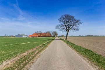 Ein Baum steht entlang einer geraden Straße in der flachen Landschaft von Groningen. von Marc Venema