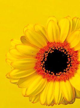 Foto van een gele/oranje bloem. van Therese Brals
