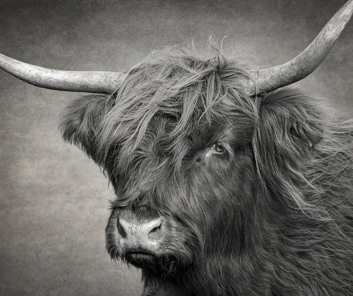 Kopf einer schottischen Highlander-Kuh in Schwarz und Weiß von Marjolein van Middelkoop