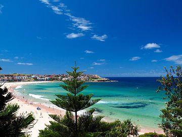 Bondi Beach - Sydney van