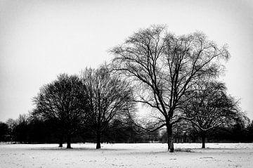 Sneeuw in het park van Karin Stuurman