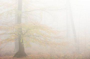 Ruhe und Frieden im Wald von Danny Slijfer Natuurfotografie