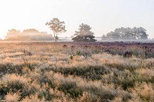 Heidelandschap van Nancy Lamers