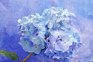 Zarte Blüte van Martina Fornal
