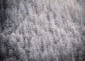 Het Zilveren Bos van Queenstown in Nieuw-Zeeland van Rik Pijnenburg