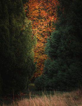 herfst doorkijkje van Kristoff De Turck