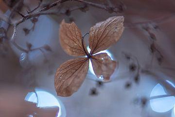 moody hortensia blaadje van Tania Perneel