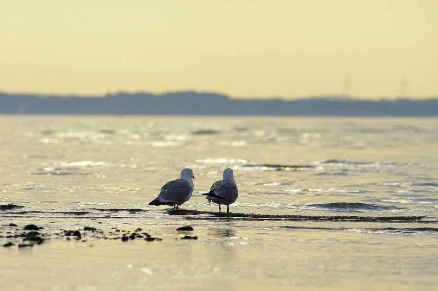 Longing twee meeuwen te kijken naar de zee