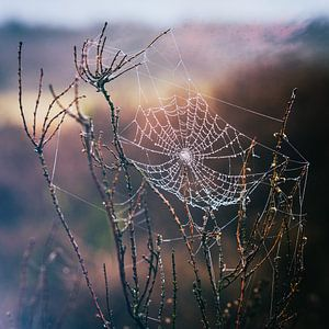 Spinnenweb tovenaar van