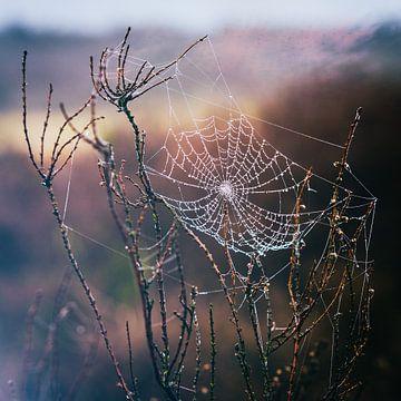 Spinnenweb tovenaar van Tvurk Photography