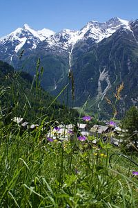Het leven in de Zwitserse bergen op een zomerse dag