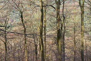beukenbos in het voorjaar von Hanneke Luit