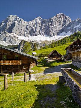 Alpensommer IV von Rainer Mirau