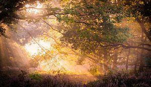 mistige zonsopgang bos van