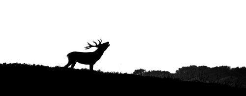Edelhert in silhouet (bok) van Sjoerd de Hoop