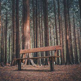 Lege bank in donker bos van rosstek ®