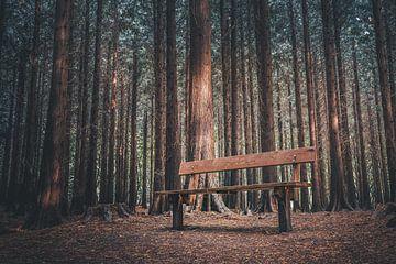 Banc vide dans une forêt sombre sur rosstek ®