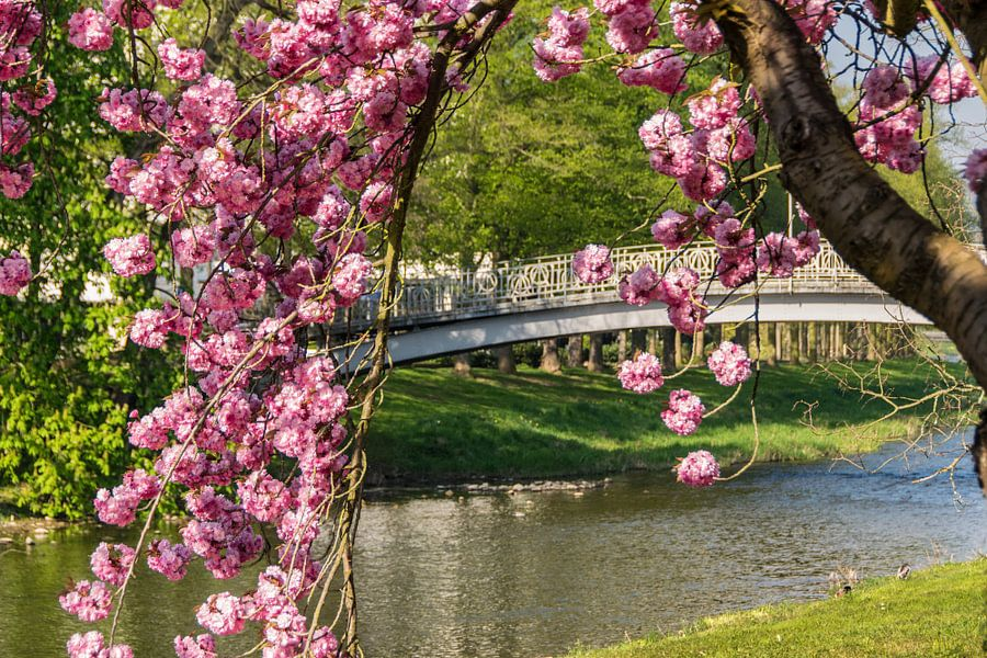 Kirchblüte van Heinz Grates