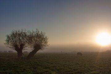 Koeien in de mistige polder. van Maarleveld Fotografie