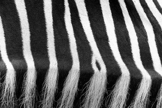 Abstracte close up van een zebra van Heino Minnema