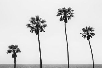 Palmen aan zee Monochroom van Melanie Viola