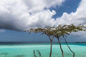Divi divi boom aan de kust van Mangel Halto Beach (Aruba) van eusphotography