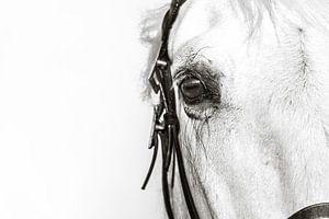 Paardenogen zeggen meer van