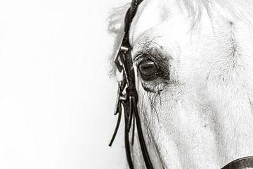 Pferdeaugen sagen mehr von Merel van Luijk