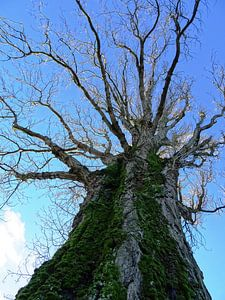 Tree Magic 75