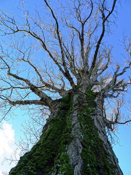 Tree Magic 75 van MoArt (Maurice Heuts)