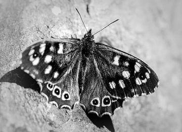 Schwarzer und weißer Schmetterling von Anouk Snijders