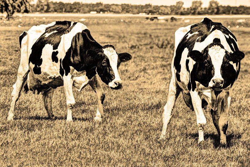 Zwartbont Koeien in de Weiland Sepia van Hendrik-Jan Kornelis