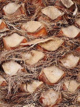 palmboom detail van ÇaVa Fotografie