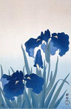 Iris, Ohara Koson von