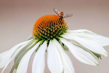 Insect op witte bloem van Eveline Dekkers