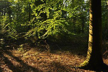 Zon in het bos van