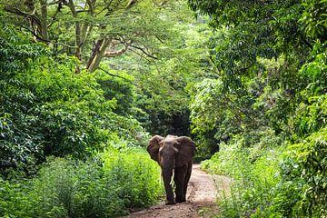 Elefant im Dschungel von Tansania von OCEANVOLTA
