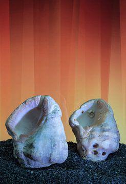 Shells van Tomas S.