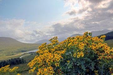 Schotland von Tineke Roosen