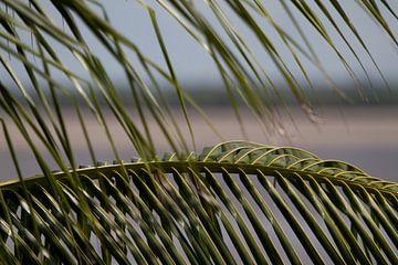 Palmbladeren langs de Surinamerivier van rene marcel originals