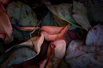 Getrocknetes Rosenblatt von Jenco van Zalk