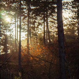 Rétro-éclairage sur les feuilles sur Martijn Tilroe