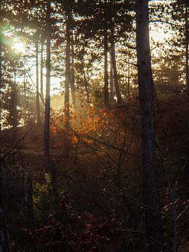 Rétro-éclairage sur les feuilles