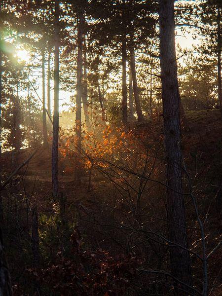 Gegenlicht auf den Blättern von Martijn Tilroe