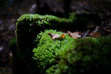 Groen mos in het zonlicht van Fotografiecor .nl