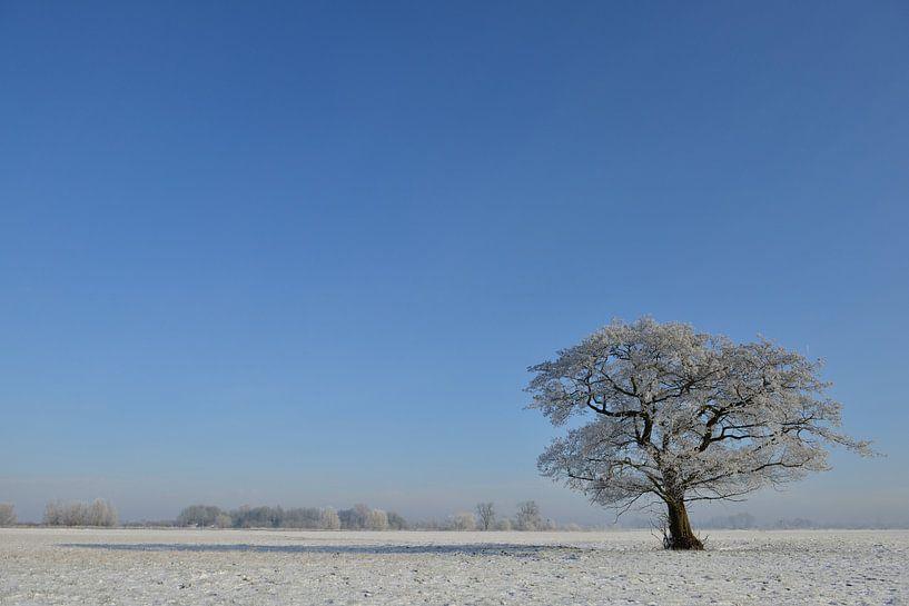 Boom in een winters landschap sur Sjoerd van der Wal