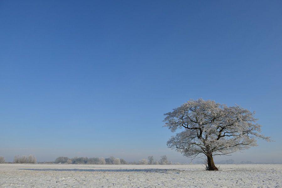 Boom in een winters landschap