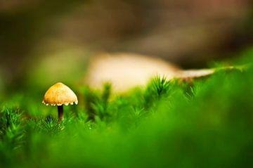 De eerste paddenstoel van