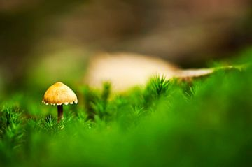 De eerste paddenstoel van Mees Tempelaar