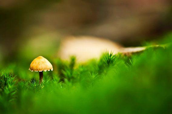 De eerste paddenstoel